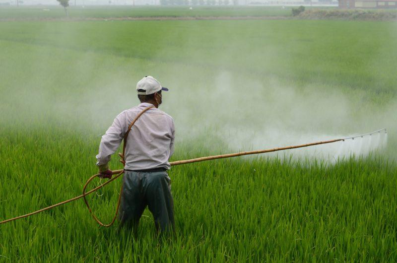 田んぼに農薬をまく男性