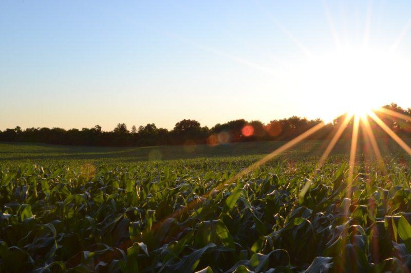 太陽の光を浴びた畑