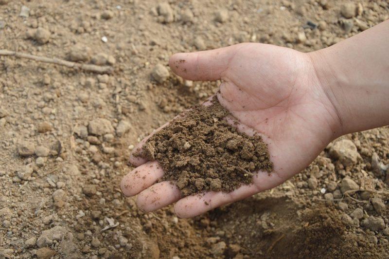 掌の上ののせた畑の土