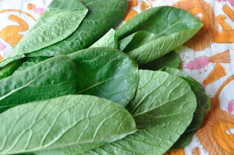 小松菜の虫食い部分