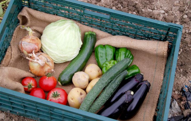 あらい農園ホームページより 野菜セットの画像