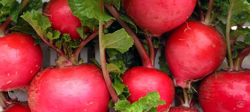 ナガツミファームの色鮮やかな赤カブ