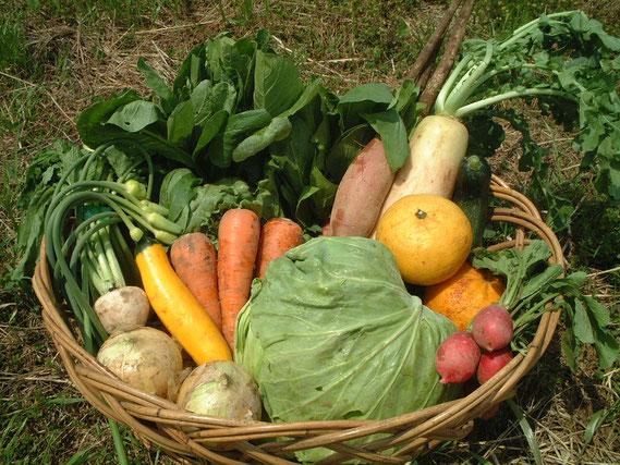 くまもと有機の会 畑に置かれているザルに入った野菜セット