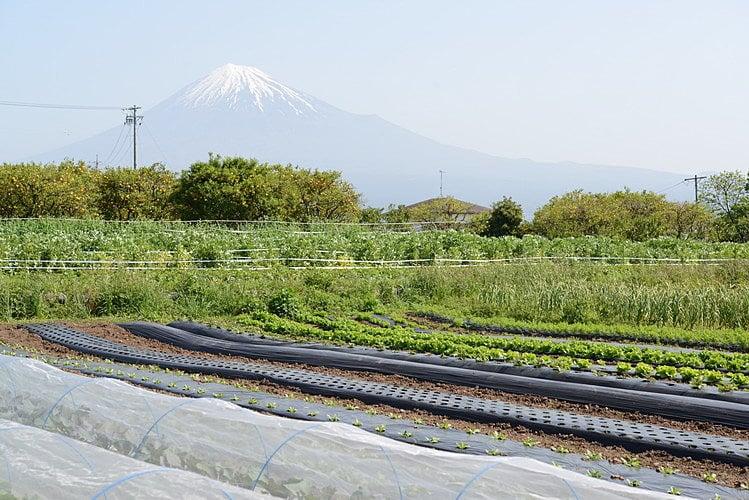 オトワファームホームページより 富士山を望む農場の写真