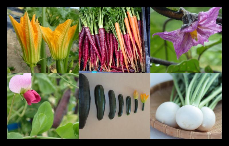 しあわせ野菜畑ホームページより 様々な野菜の写真