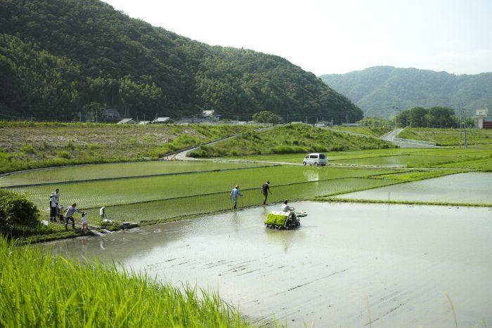 五ふしの草 ホームページより 山々を望む田んぼの写真