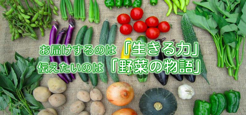 しあわせ野菜畑ホームページより たくさん並んだ野菜の画像