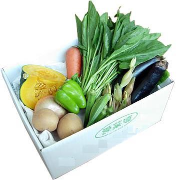 愛菜連の野菜セット