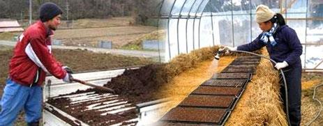 まるみど農園ホームページより 苗に水やりをするまるみど農園のご夫婦