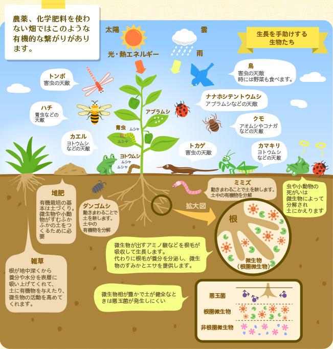 富士山の恵みファームホームページより、畑の循環の様子を描いた画像