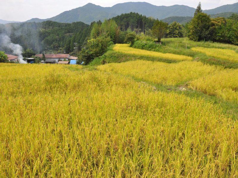 東白川村役場ホームページより 東白川村にひろがる美しい田園風景の画像