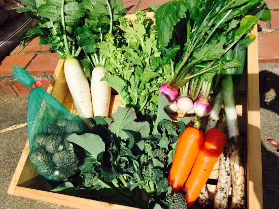 寺町畑の野菜セット 7種類盛り合わせ
