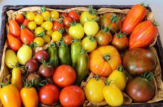 ロカヴォが作る様々な品種のトマト たくさんの種類のカラフルなトマトが並んでいる画像