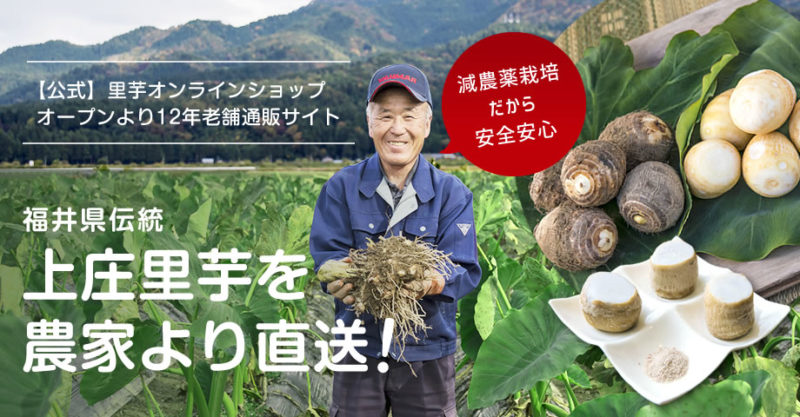 福井県名産の上床里芋の畑で里芋手に取る生産者