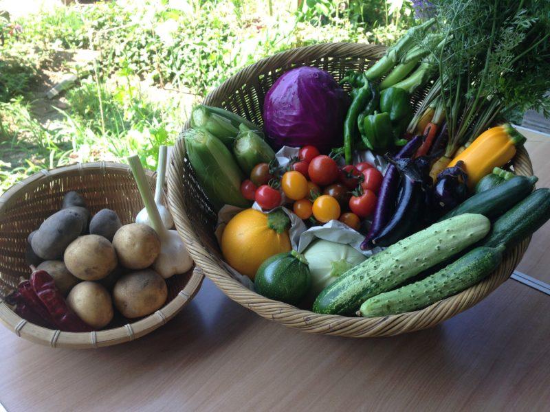 オーガニックファーム チュトワホームページより たくさんのカラフルな野菜がならっぶ野菜セットの画像