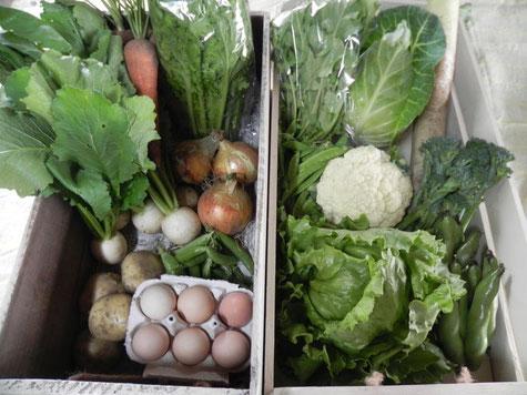 ほりぐち農園ホームページより たくさんの野菜が詰まった野菜セットの画像