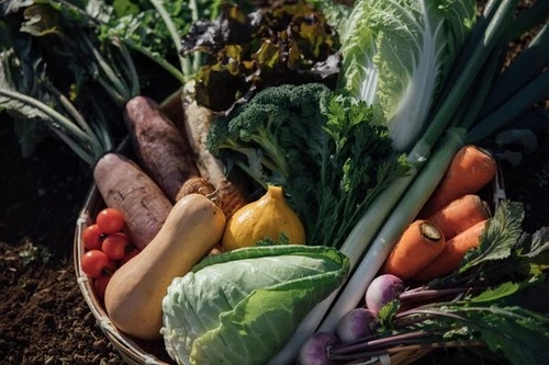 畑山農場の野菜 ザルに乗ったたくさんの美味しそうな野菜