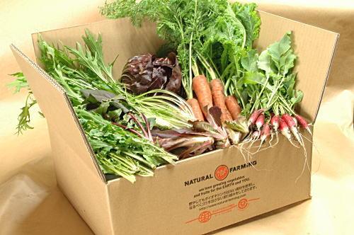 ナチュラルファーミングの野菜セット たくさんの元気な野菜が箱に詰められている画像