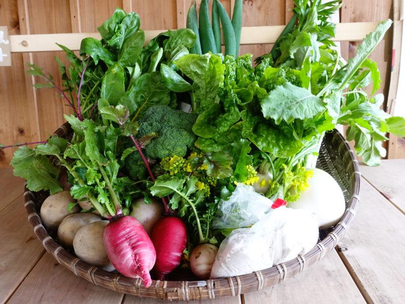 むかし野菜の邑の野菜 力強さを感じるたくさんの野菜