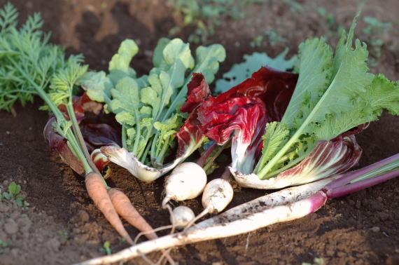 ナチュラルファーミングの野菜セット