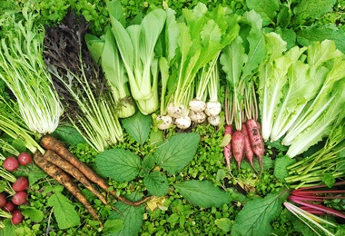 うさみファームの根菜類 畑に並ぶカラフルな根菜たち