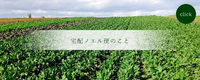宅配ノエル便ホームページより 葉物野菜が綺麗に並んだ畑の画像