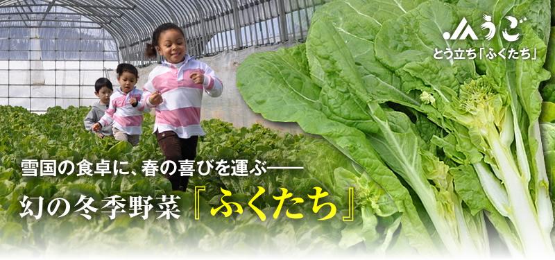 JAうごオンラインショップより 幻の野菜「ふくたち」の画像