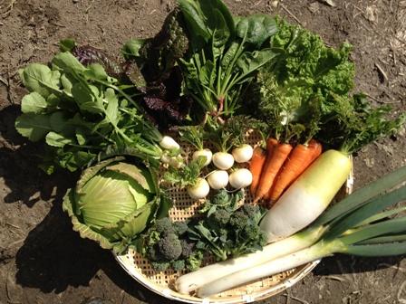 田中野菜ホームページより 野菜セットLの画像 ざるの上にたくさんの野菜が並んでいる