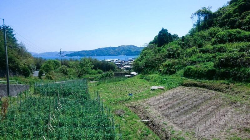 野の畑 みやた農園ホームページより 海が見える畑の画像