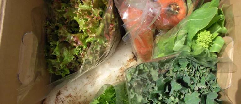 TAROやおやホームページより たくさんの野菜が箱に詰め込まれた野菜セットの画像