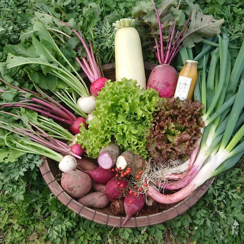 野の畑 みやた農園ホームページより 紅白祝い便の画像 赤と白の野菜が盛りだくさん
