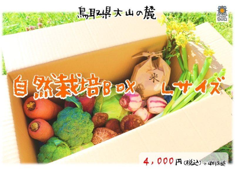 國吉農園ホームページより 野菜ボックスLサイズの画像