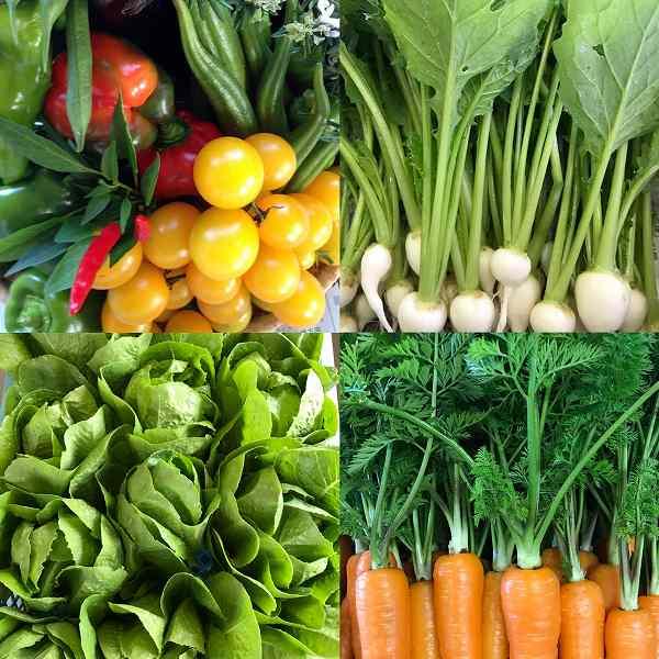 楽笑農園カームガーデンの野菜セット たくさんの綺麗な野菜が並んだ画像