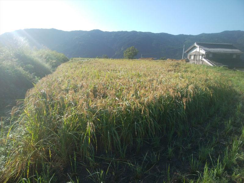 いのちの土の農園の田んぼの画像