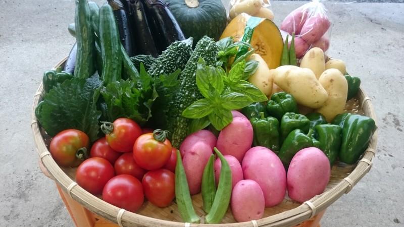 有元農場の野菜セットの画像 色とりどりの野菜がザルの上に並んでいる