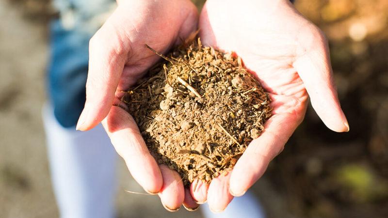 みやぎ農園ホームページより 微生物を活かした土 有機物を含んだ土を持つ生産者の手のアップ画像