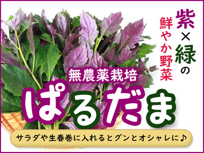 琉球マルシェ 無農薬栽培のぱるだまの画像
