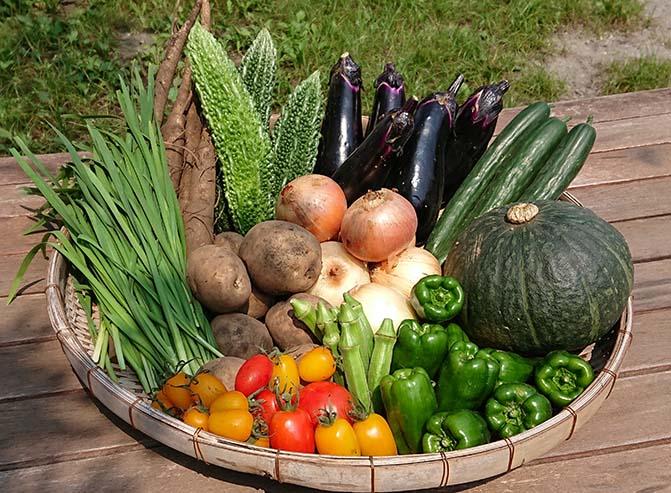 ザルの上に山盛り置かれた綾早川農苑の野菜の画像