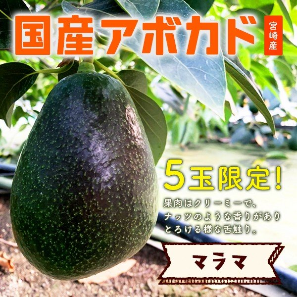 やお九州で扱う希少な宮崎県産アボカドの画像