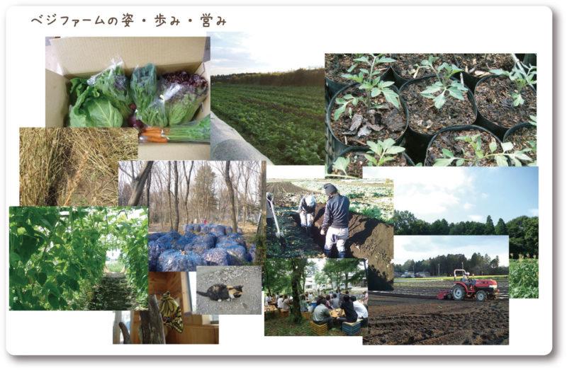 ベジファームホームページより 畑や野菜のスナップ写真