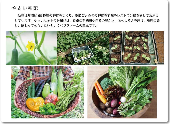 ベジファームホームページより 野菜セットや畑の様子のスナップ画像