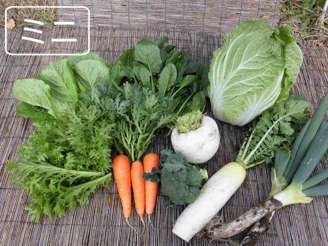 ヤヤキタ農園ホームページより たくさんの野菜が並んだ野菜セットミニのサンプル画像
